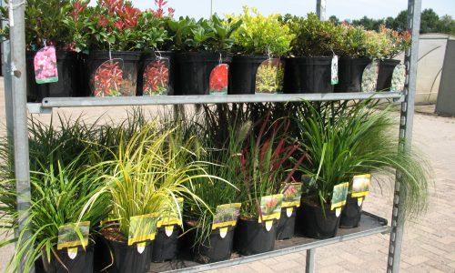 Gräser auf CC, Gräser und Moorbeetpflanzen, Mix, Ziergräser, Azalea, Rhodo, Baumschule Bunger